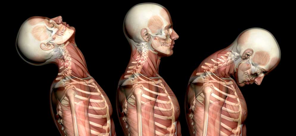Anatomy amp Physiology Course Online Accredited Class - dinocro.info