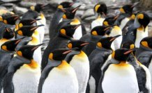 Animals For Everyone: Penguins
