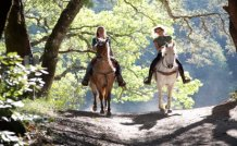 Horseback Riding 101