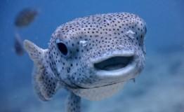 Marine Biology 101