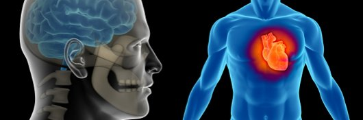 Online Course: Anatomy and Physiology 101 - CEU Certificate ...