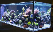 Aquariums for Fish