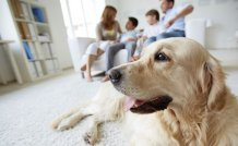 How to Choose the Right Dog for You