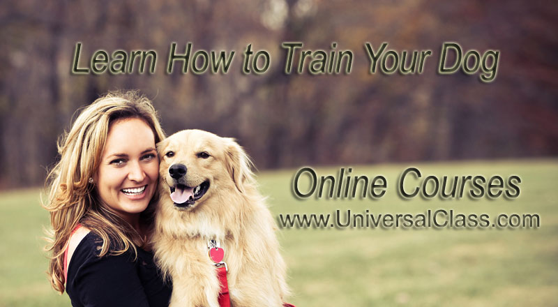 Classes Online Dog Grooming Classes Online