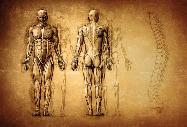 Human Anatomy Courses
